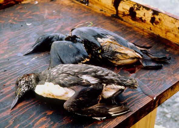 Крупнейшая экологическая катастрофа!. Изображение № 21.