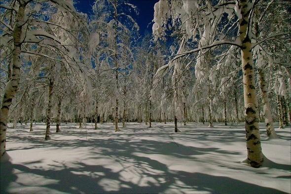 Изображение 1. Выходные в шведском лесу.. Изображение № 1.