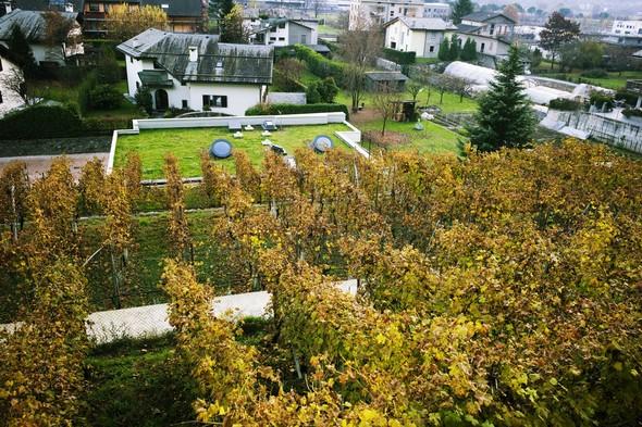 Горный виноград Nebbiolo. Изображение № 8.