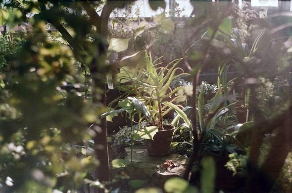 Прогулка по Ботаническому саду. Изображение № 4.