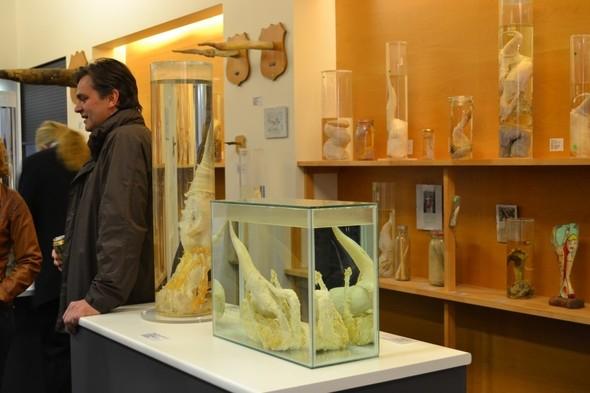 Фаллологический музей вернулся в Рейкьявик. Изображение № 7.