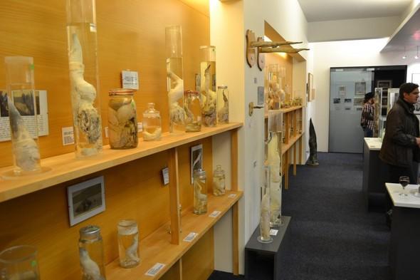 Фаллологический музей вернулся в Рейкьявик. Изображение № 1.