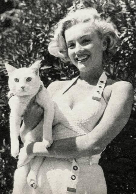 Коты и их знаменитости. Изображение № 4.