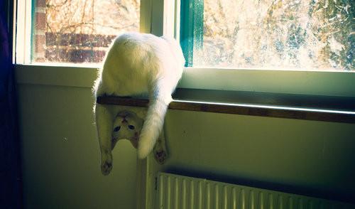 Фотографии животных. Изображение № 35.