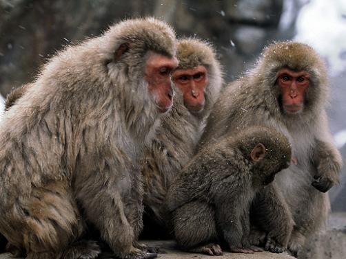 И даже обезьянам нужен отдых. Изображение № 7.