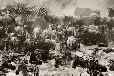 Steve Bloom – всемирно известный фотограф- анималист. Изображение № 16.
