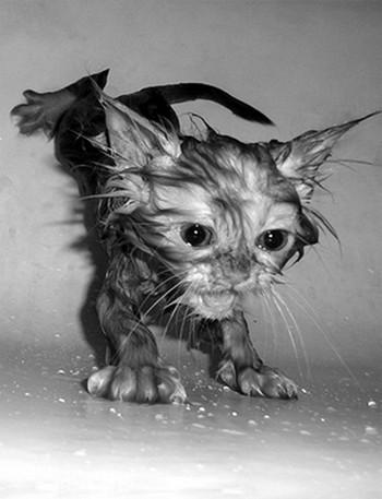 50 животных, которые ненавидят мыться. Изображение № 12.