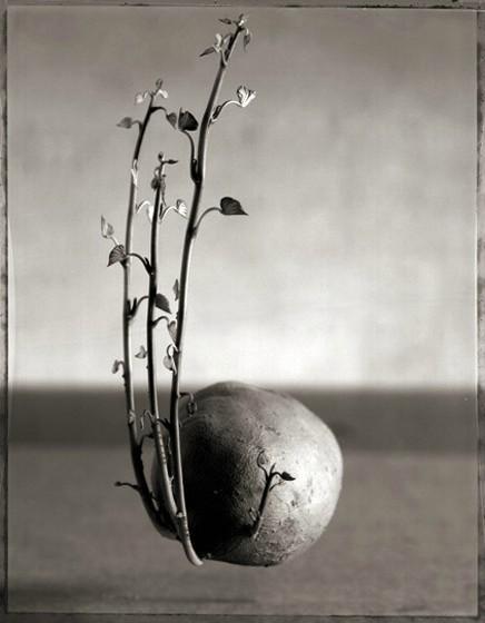 Photographer John Chervinsky. Изображение № 25.