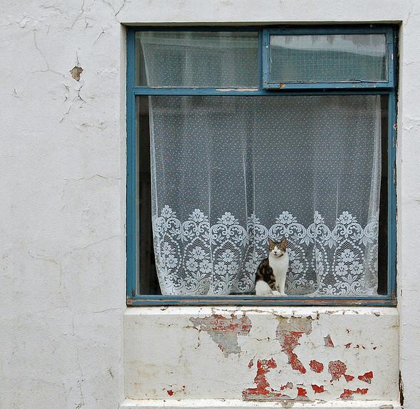 Cat. Window. Изображение № 9.