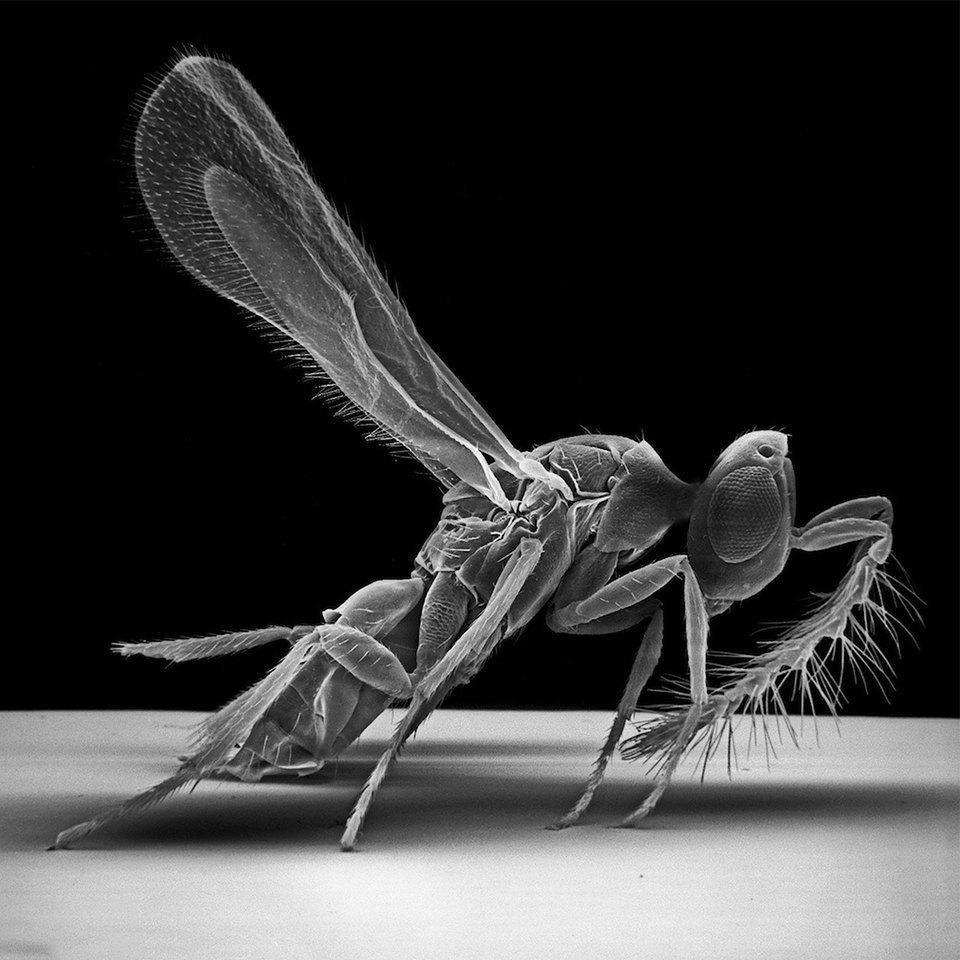 Как насекомые выглядят под микроскопом:  9 высокоточных изображений. Изображение № 3.