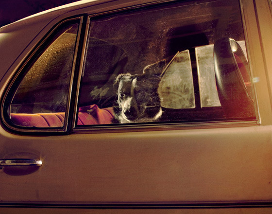 The silence of dogs in cars. Изображение № 7.