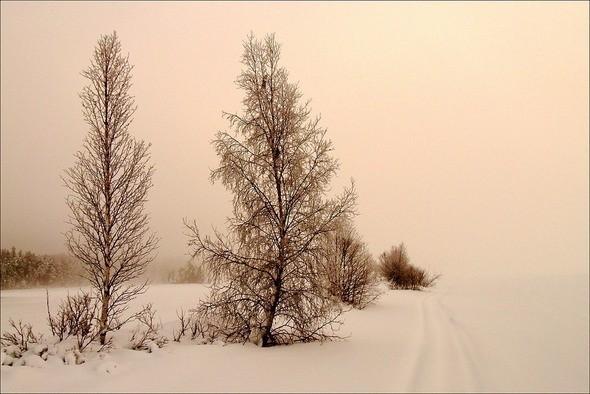 Изображение 40. Выходные в шведском лесу.. Изображение № 40.