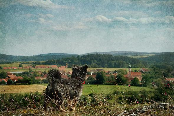 Томас Гаук. Пейзажи на перекрестке времен. Изображение № 11.