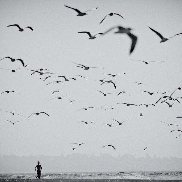 Пронзаясь махом крыльев - non stop. Изображение № 28.