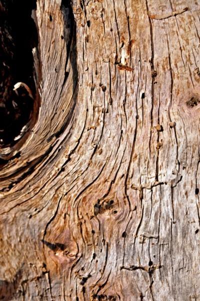 Treefilia. Изображение № 24.