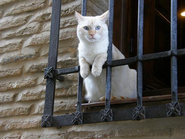 Cat. Window. Изображение № 37.