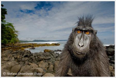 Победители Wildlife Photographer 2008. Изображение № 33.
