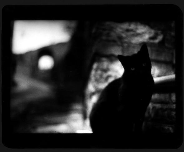 Джакомо Брунелли и«другие» животные. Изображение № 16.