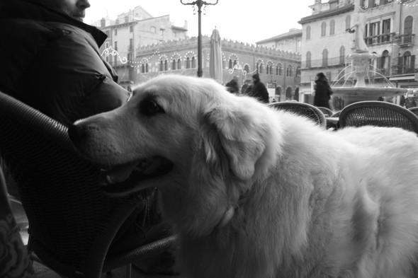 Verona. Изображение № 6.
