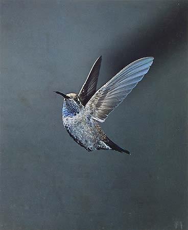 Элиот Портер: фотограф раскрасивший мир. Изображение № 13.