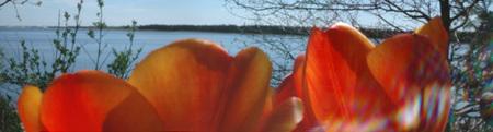 Изображение 9. Worldwide Pinhole Photography Day.. Изображение № 9.