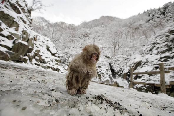И даже обезьянам нужен отдых. Изображение № 10.