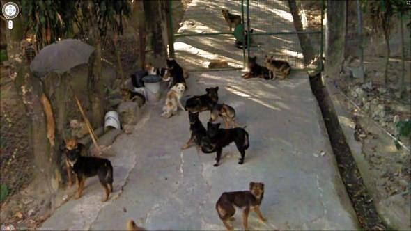 Изображение 7. Интересные уличные сцены, подсмотренные с Google Streets.. Изображение № 7.