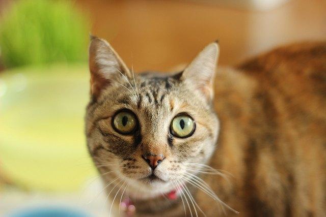 Учёные создали музыку для кошек. Изображение № 1.