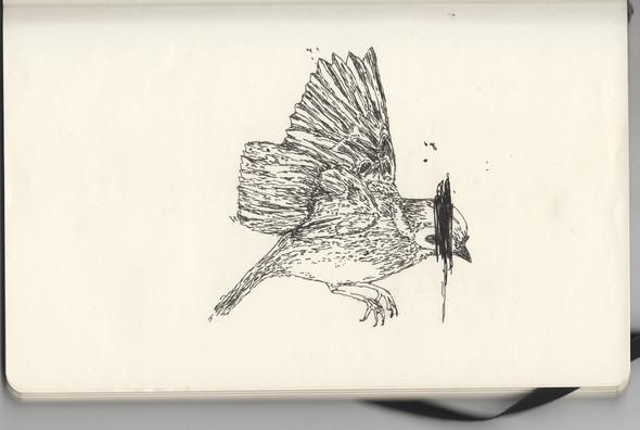 В тонких и резких штрихах: не повседневные иллюстрации. Изображение № 12.
