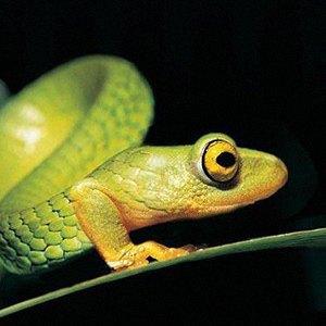 Тест: отличите  настоящее животное  от вымышленного. Изображение № 34.