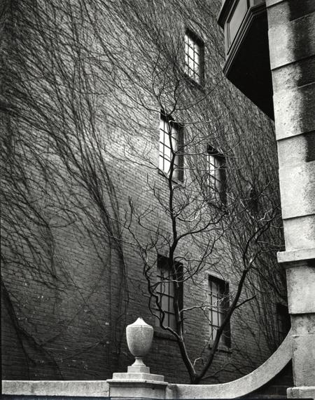 Brett Weston. Изображение № 8.