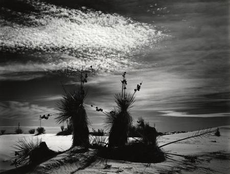 Brett Weston. Изображение № 2.