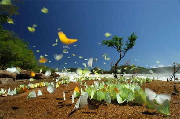 Лучшие снимки от National Geographic. Изображение № 16.