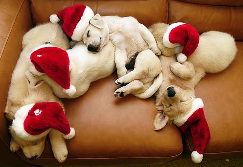 Puppy, puppy, 1-2-3!. Изображение № 15.