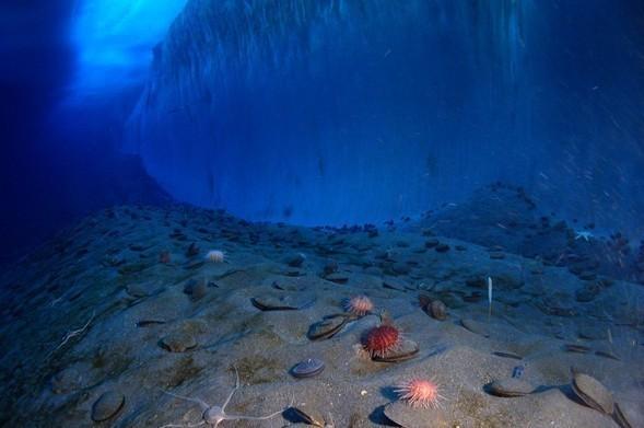Антарктические сны. Красоты южного полюса. Изображение № 22.