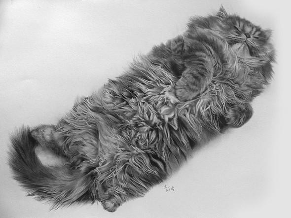 Кошки, люди, карандаш. Paul Lung. Изображение № 8.