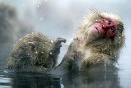 И даже обезьянам нужен отдых. Изображение № 6.