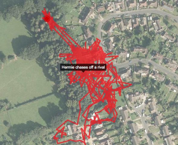 BBC узнали о тайной жизни кошек с помощью GPS . Изображение № 1.