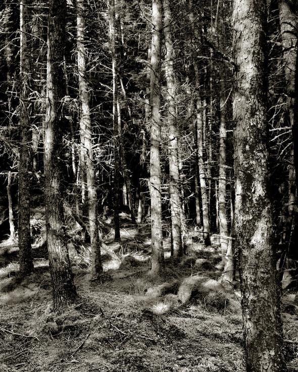 Изображение 18. Альберт Уотсон - шотландский фотограф, покоривший мир.. Изображение № 18.