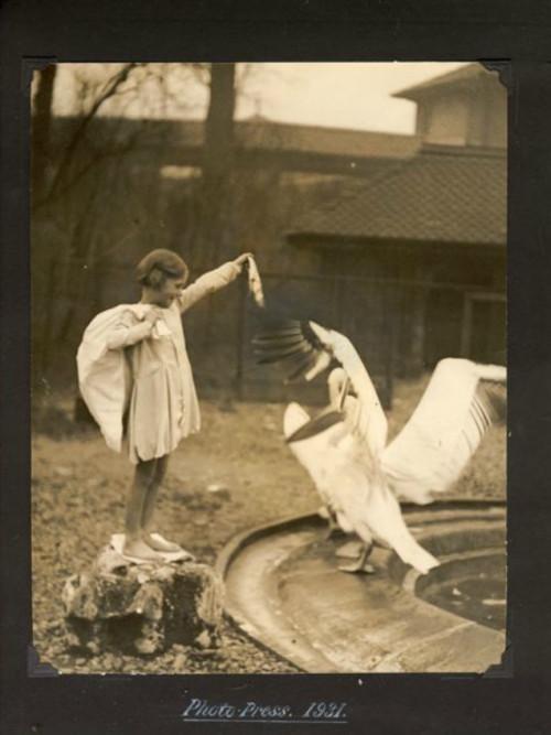 Лондонский Зоопарк 30-х. Изображение № 2.