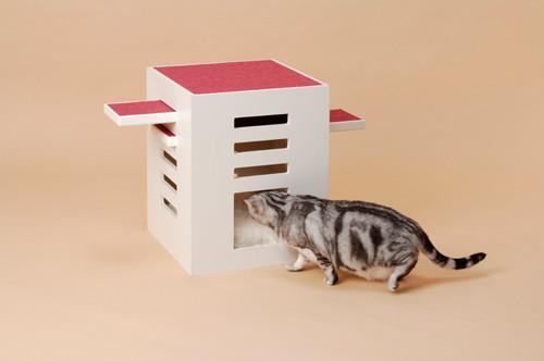 Кошачье дерево. Изображение № 2.