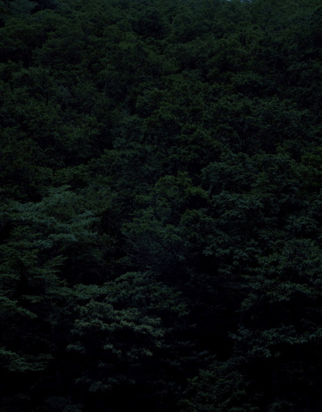 Темный лесКейты Сигиуры. Изображение № 10.