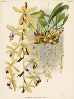 Глянцевые орхидеи: слухи, сплетни, комментарии. Изображение № 11.