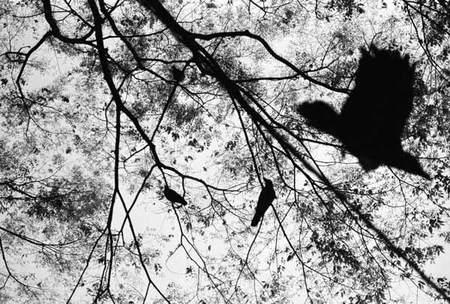 BOOGIE PHOTOGRAPHER. Изображение № 7.