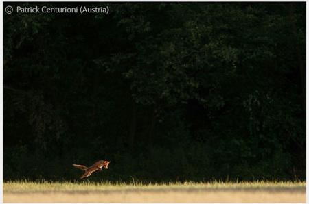 Победители Wildlife Photographer 2008. Изображение № 20.