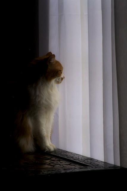 Cat. Window. Изображение № 31.