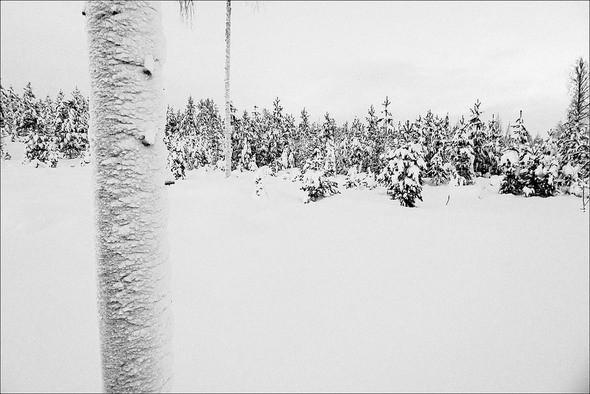 Изображение 32. Выходные в шведском лесу.. Изображение № 32.