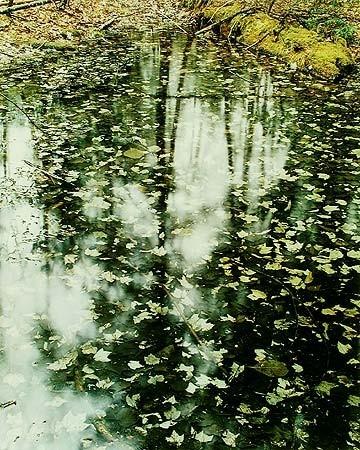 Элиот Портер: фотограф раскрасивший мир. Изображение № 6.