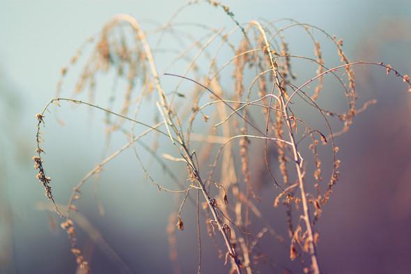 """""""Наступает"""". Фотограф Мария Гомолова. Изображение № 2."""