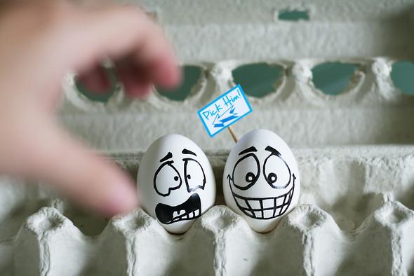 Удивительная жизнь яиц. Изображение № 3.